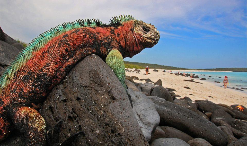 Ecuador e Galapagos, Tour Express e crociera