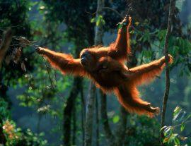 In viaggio con l'antropologo – Malesia