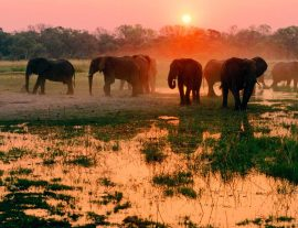 Okavango e Wildlife Adventure