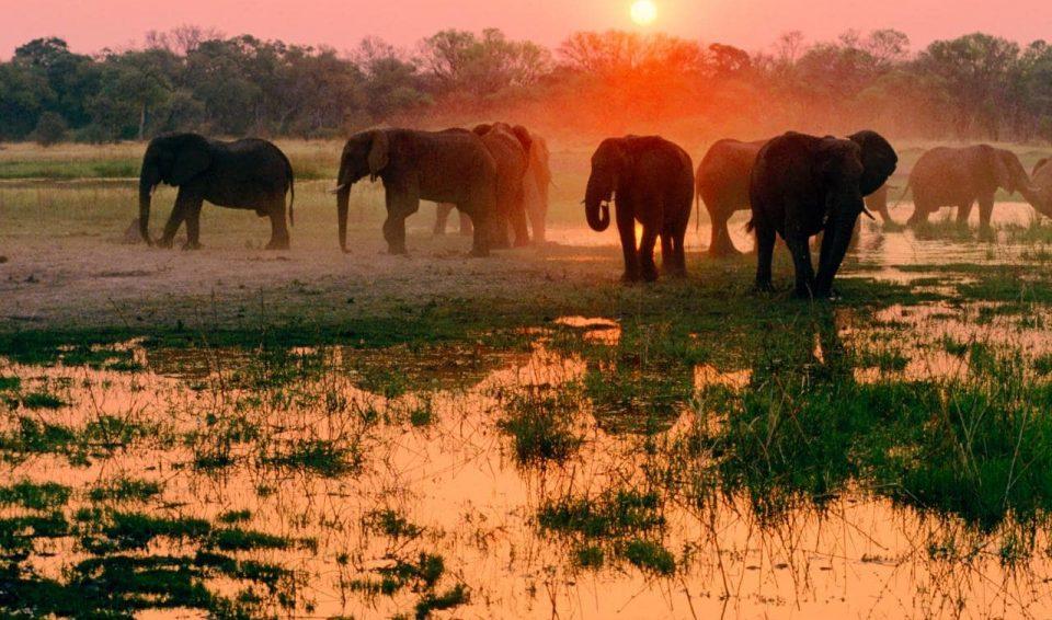 Botswana e Victoria Falls: Okavango e Wildlife Adventure