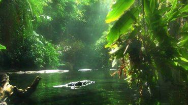 Brasile e Amazzonia, incanto da vivere
