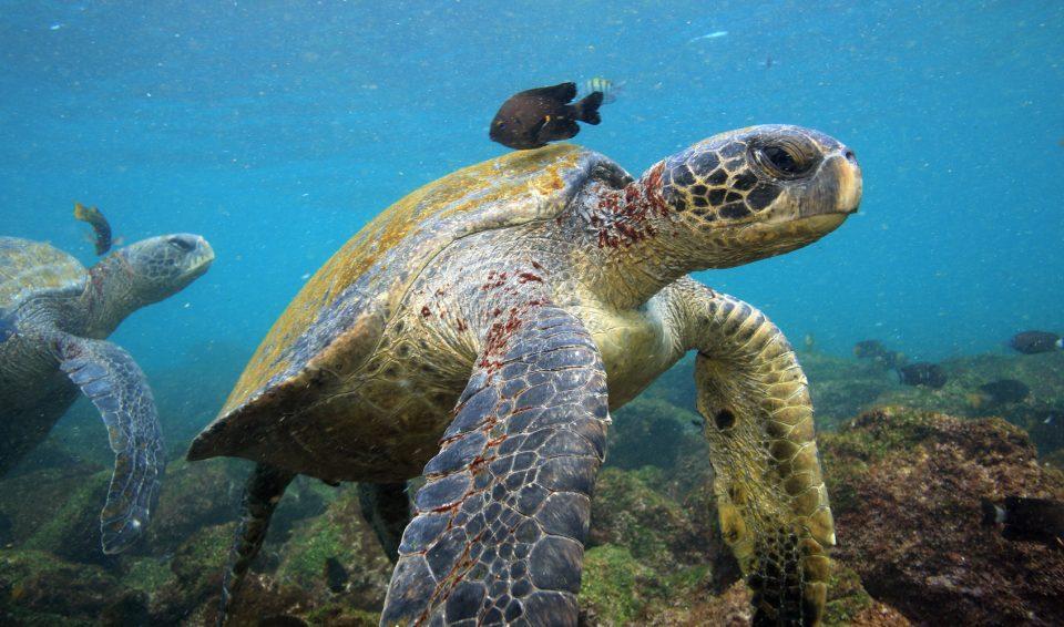 Ecuador e Galapagos, Tour Express e Crociera – 2018