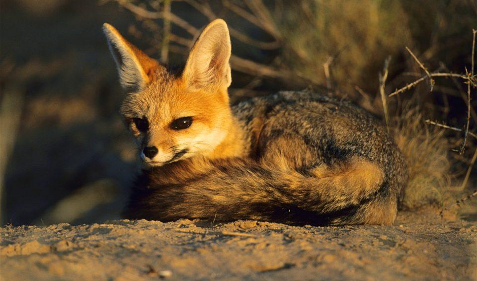 Sudafrica, Natura Sovrana