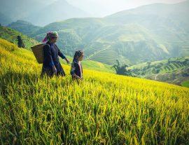 Vietnam con Sapa e Can Cau 2019