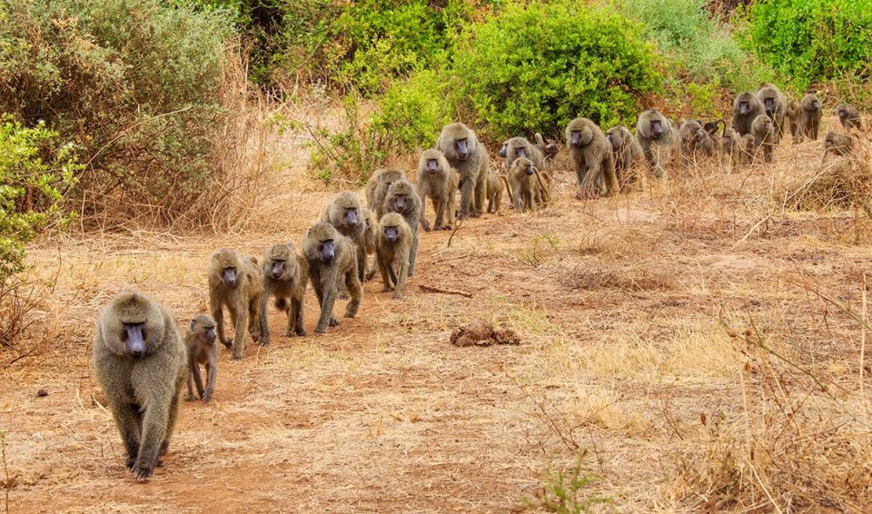 Tanzania, tra savana e laghi