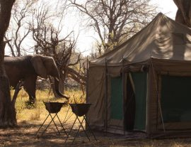 Botswana Adventure