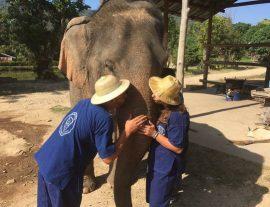 Thailandia Casual Eco Elephant Experience  – nov'17 – ott.'18