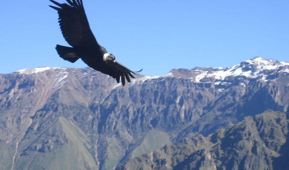 Sulle orme degli Inca