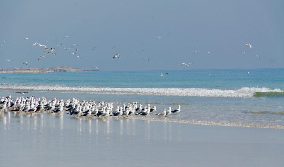 Oman e Isola di Masirah – SPECIALE PARTENZA 14 OTTOBRE