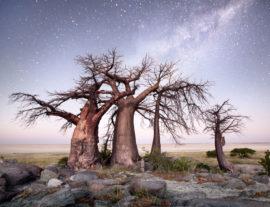 Botswana, Namibia e Zimbabawe: Okavango e Wildlife Adventure