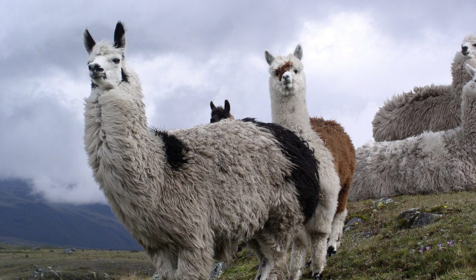 Gran Tour Ecuador e Galapagos 2019