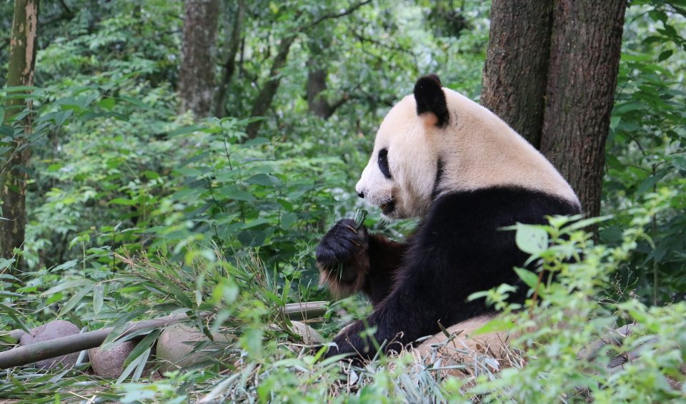 Gran Cina con Chengdu – 2019