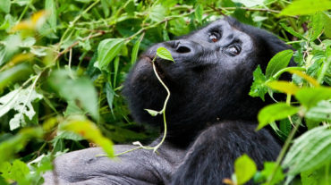 UGANDA – SPECIALE PARTENZA 08 AGOSTO