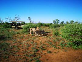 Sudafrica, il paese arcobaleno