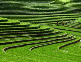 Tesori indonesiani: Bali e Gili