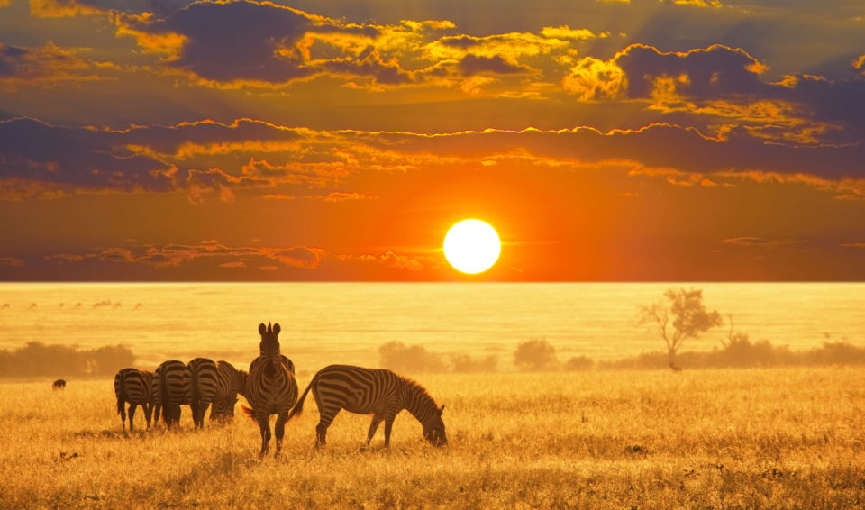 Malhori tour: Cape Town, Johannesburgh e Parco Kruger