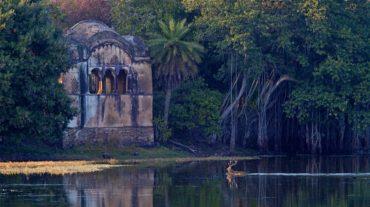 Essenza indiana: tradizione e natura