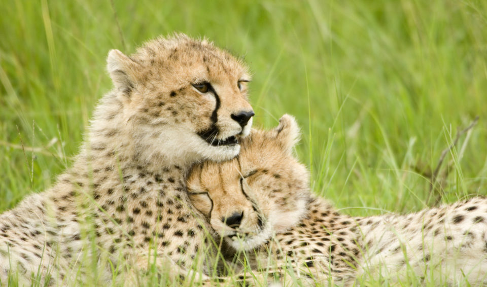 Kenya & Uganda, natura incontrastata