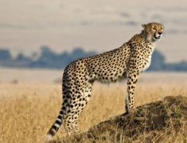 Tanzania, tra safari e mare