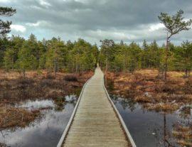 Lettonia ed Estonia, tra castelli e parchi nazionali in Fly & Drive