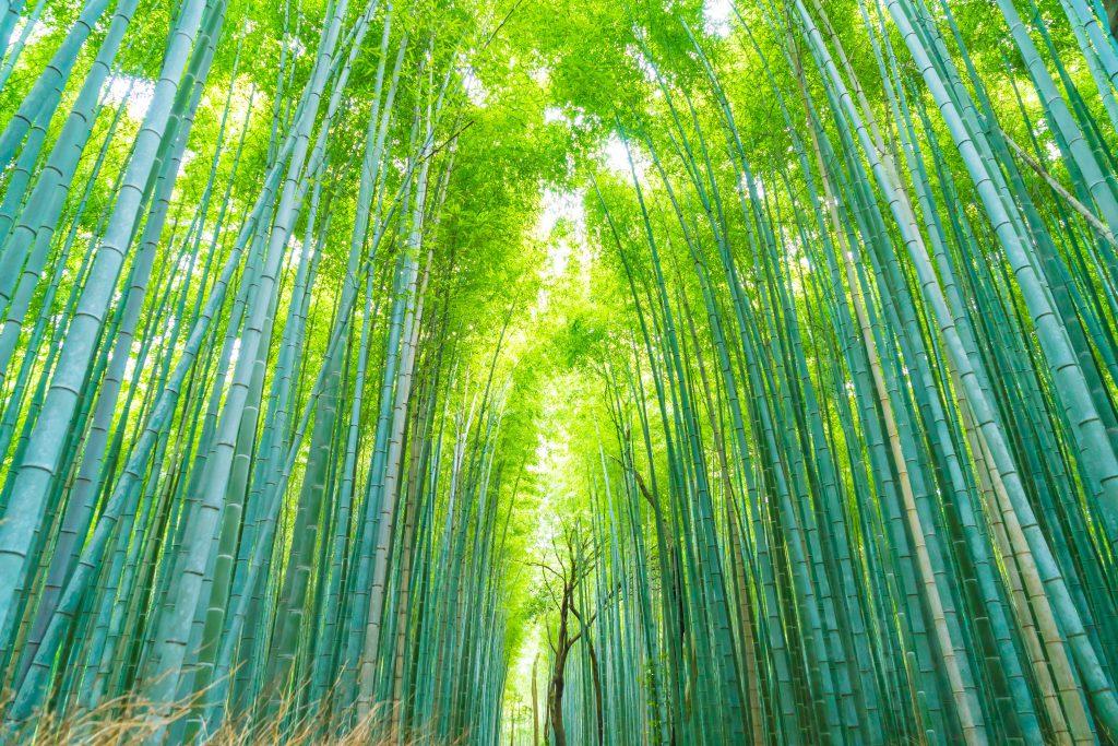 arashiyama-foresta-di-bamb-1024x683
