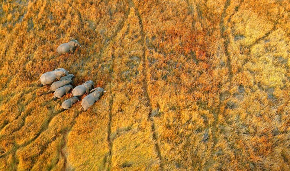 NAMIBIA, BOTSWANA E ZIMBABWE: IL GRANDE VIAGGIO – SPECIALE UBUNTU 18 GIUGNO 2020