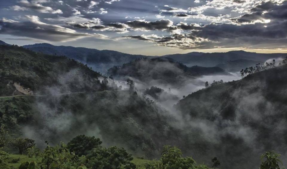 Uganda, il Regno dei Gorilla – Edizione 2020