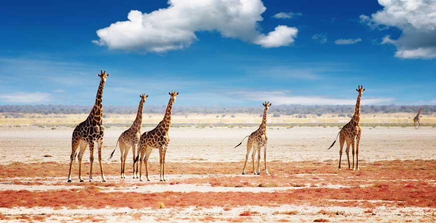 Full Namibia Experience con Caprivi Strip – 7 Agosto 2020