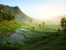 Easy Bali