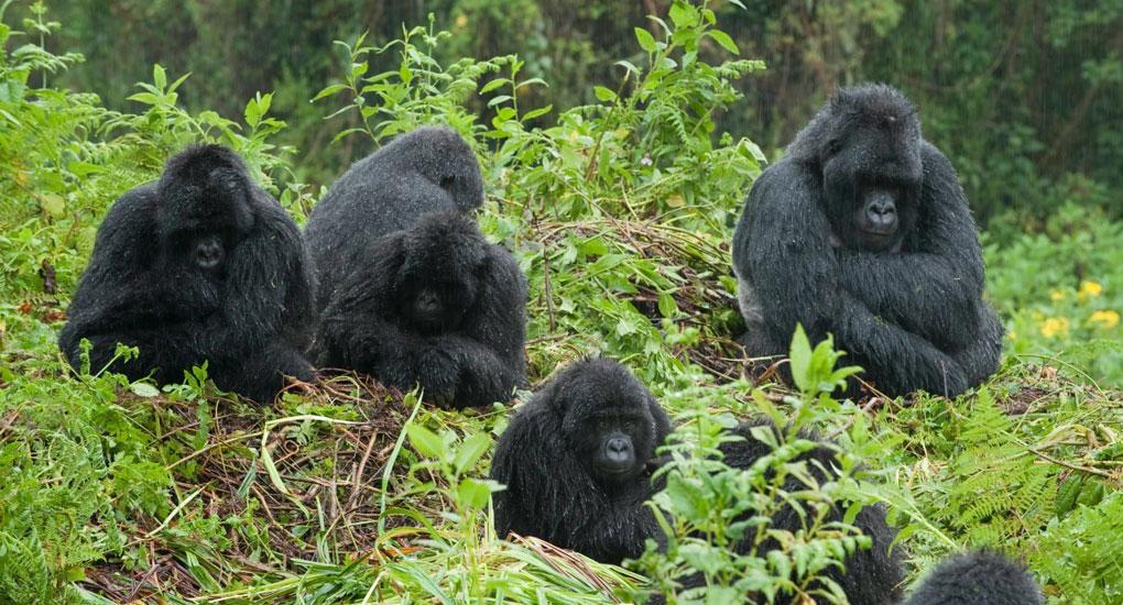 Bwindi Forest