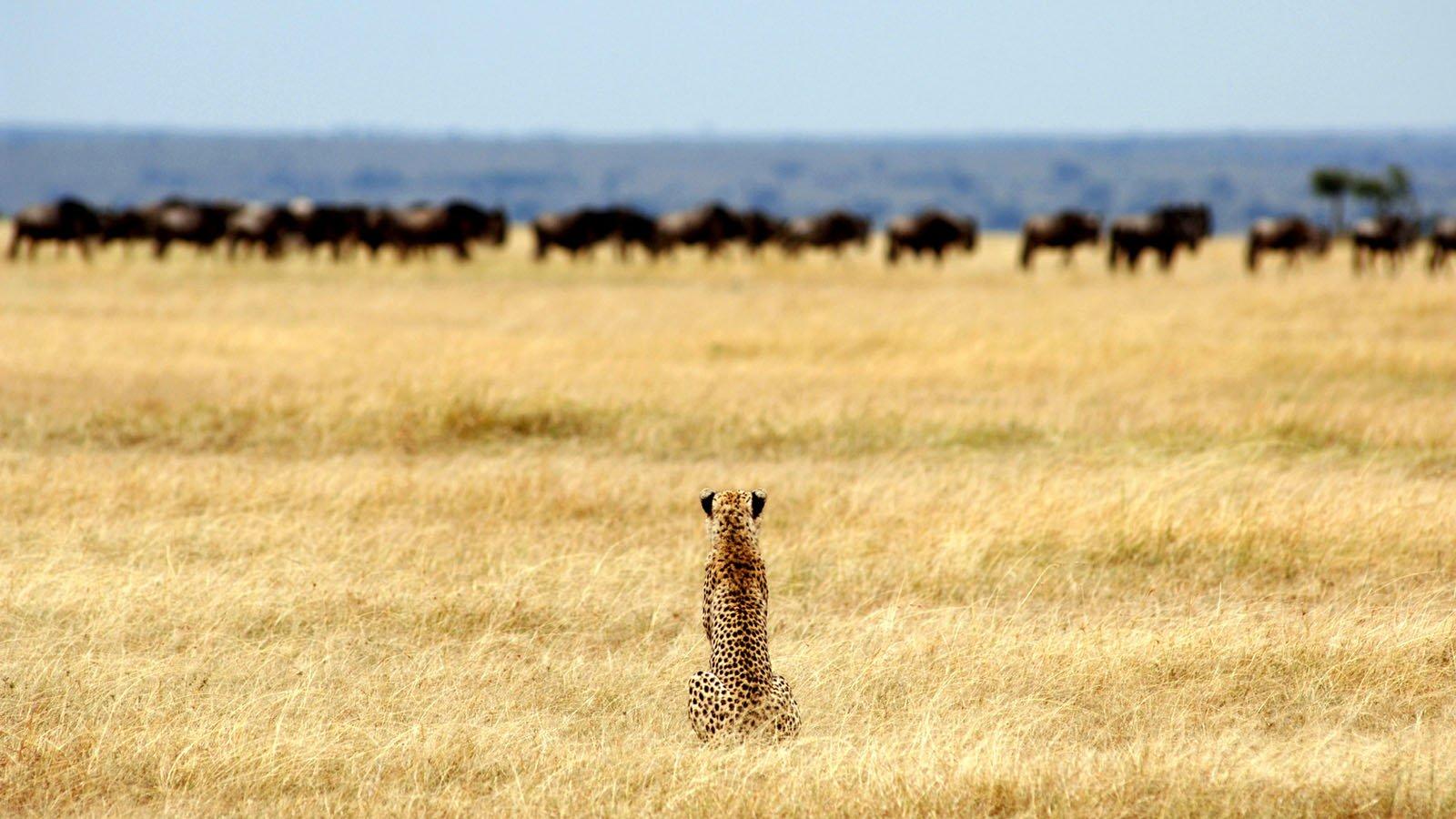 Parco Nazionale del Serengeti